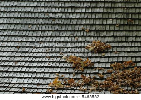 An Autumn Roof
