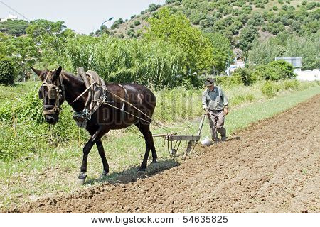 ALJEZUR, PORTUGAL 4 APRIL 2011: Farmer is ploughing the land in an old fashioned way in Aljezur Portugal