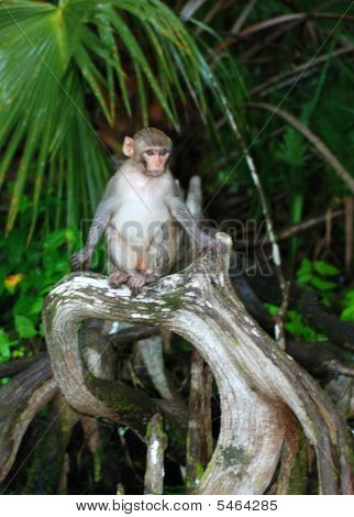 Forest Monkey Sitting