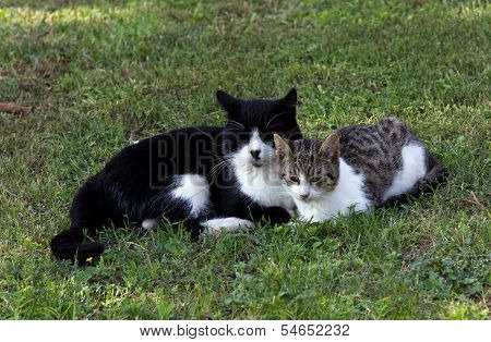 mother and daughter cats on the meadow