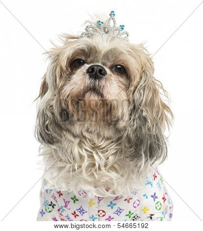 Close-up of a dressed-up Shih Tzu wearing a diadem, 4 years old, isolated on white