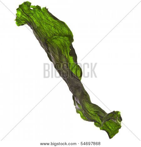 seaweed kelp ( laminaria ) surface top view close up macro shot isolated on white background