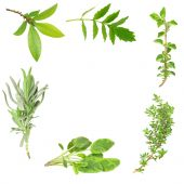 picture of valium  - Herb leaf border of bay valerian oregano lavender sage and thyme over white background - JPG