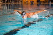 picture of swimming  - Man swims butterfly style in indoor public swimming pool - JPG