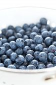 Blueberries In Siev