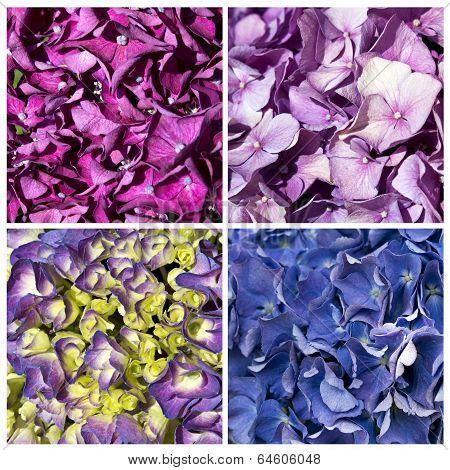 hydrangea collage textures