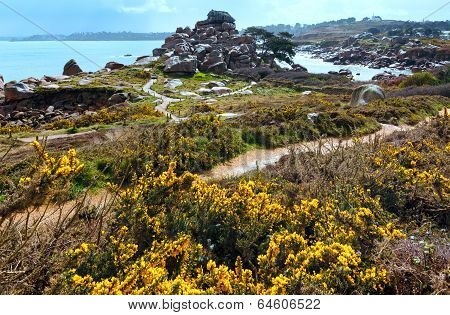Ploumanach Coast Spring View (brittany, France)