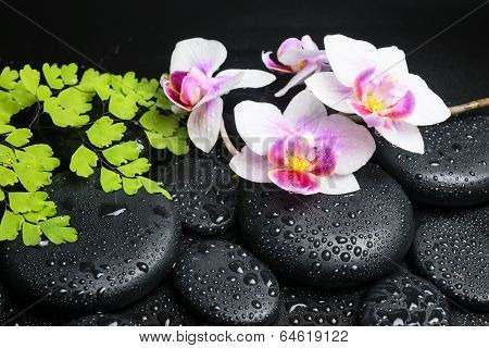 Spa Still Life Of Branches Orchid (phalaenopsis), Green Maidenhair And Zen Stones With Drops