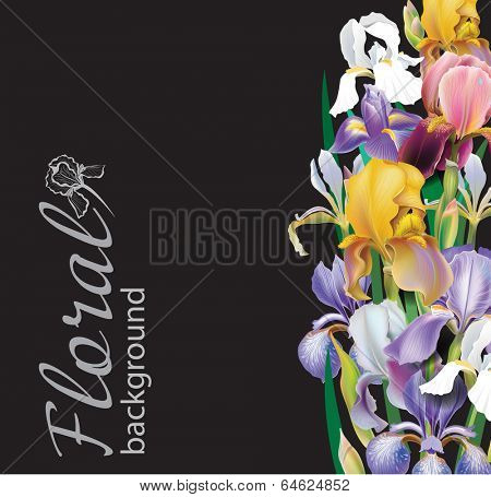 Iris flower vector background