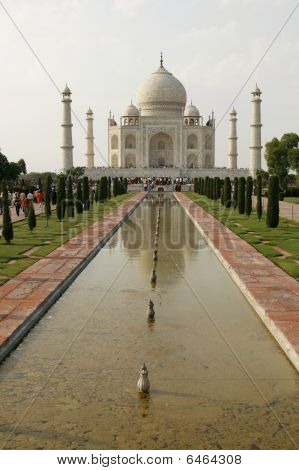 Beautiful Mosque Taj Mahal In Agra, India