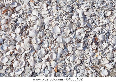 White Sea Shells And Stones