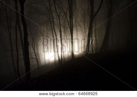 Halloween night in a scary forest with fog and light