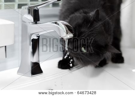 black cat drinks water from the tap