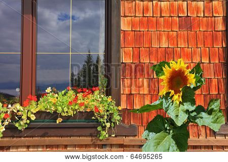 Dachstein huge tourist complex in Austrian Alps. Picturesque popular cafe window with flower pots and a large sunflower