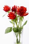 ������, ������: Strawberry Roses In The Vase