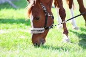 Portrait of purebred horse on nature background poster
