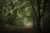 stock photo of trough  - Path trough a green forest with fog - JPG