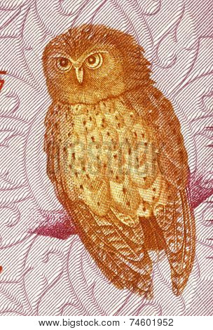 SRI LANKA - CIRCA 2010: Serendib scops owl on 20 rupees 2010 banknote from Sri Lanka.