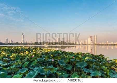 Lotus Pond And Modern City