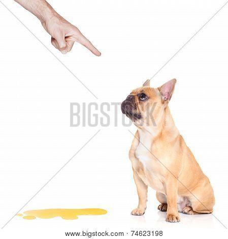 Dog Pee