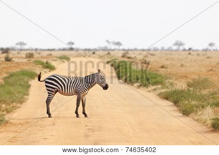 Zebra Crossing Road In Kenya