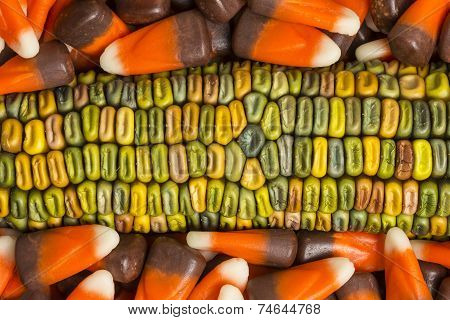 Indian Corn In Candy