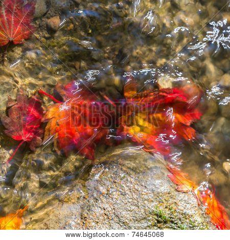 Fallen Autumn Leaves In Stream