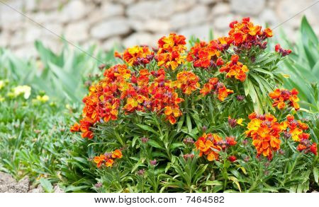 Bed Dismissed Flowers