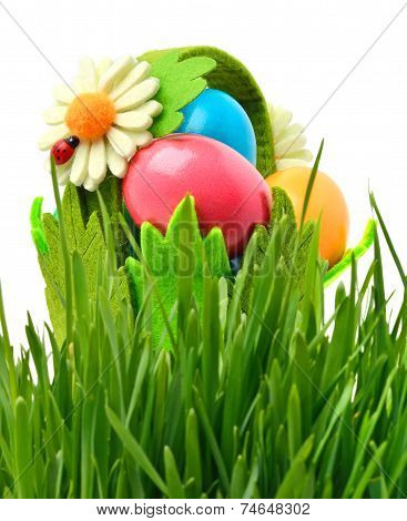 Easter Colored Eggs, An Ox-eye Daisy In The Flowerbed