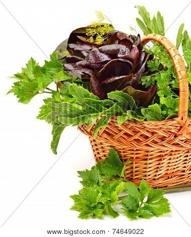 Bunch Of Different Red And Green  Lettuce, Spinach With Parsley