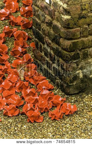 Poppies of Those Remembered