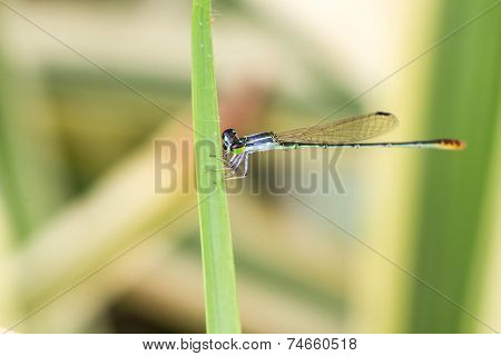 a little damsel Flies on green  grass
