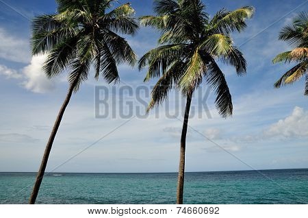 Leaning Palm Trees