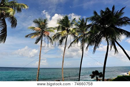 Puerto Rico And Its Palm Trees