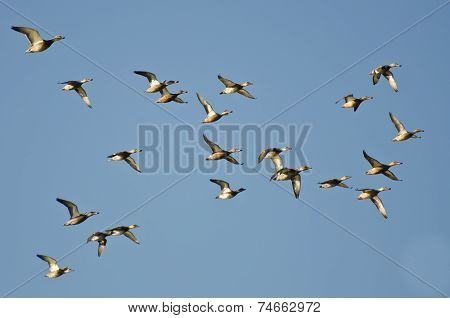 Assortment Of Ducks Flying In A Blue Sky