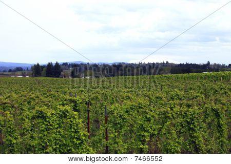Blackberry field & farm.