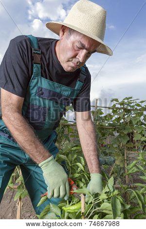 Middle Aged Farmer