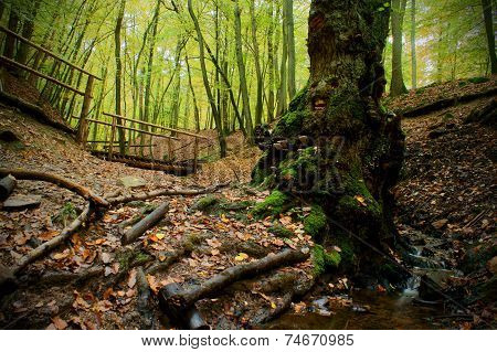 Season Forest Path And Creek