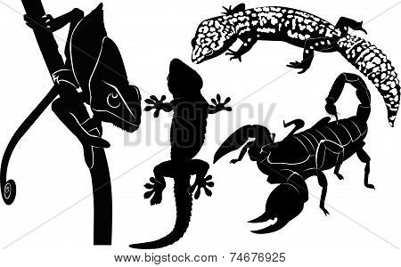 scorpion gecko chameleon