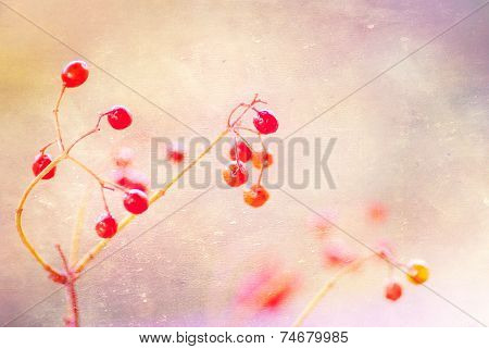 Rowan Branch On A Light Red Background