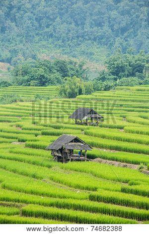 Rice Terraces in Chiangmai Thailand