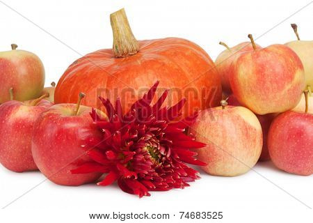 pumpkin, apples and dahlia isolted on white