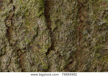Wood Surface With Moss Texture