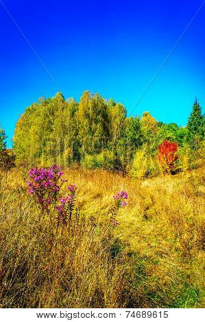 Delicious, Fabulous Fall Over Meadow.