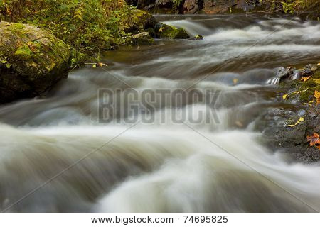 Clean Spring Creek In The Woods