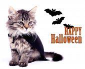 picture of cloak  - Cat in black cloak - JPG