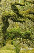 image of epiphyte  - Moss covered Granite Boulders  - JPG