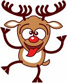 picture of bulging belly  - Nice brown reindeer with big antlers and red nose while crossing its eyes - JPG