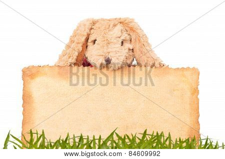 Rabbit, Holding Old Grunge Canvas Fabric Burn Edge For Happy Easter Eggs Festival With Grass Backgro