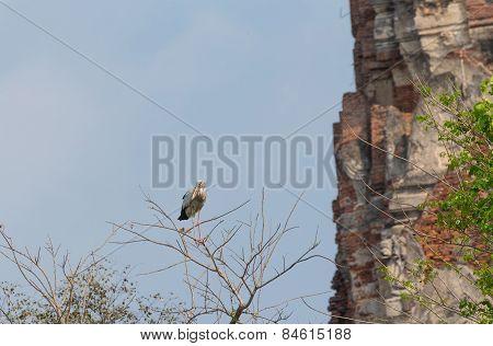 Stork bird on the branch